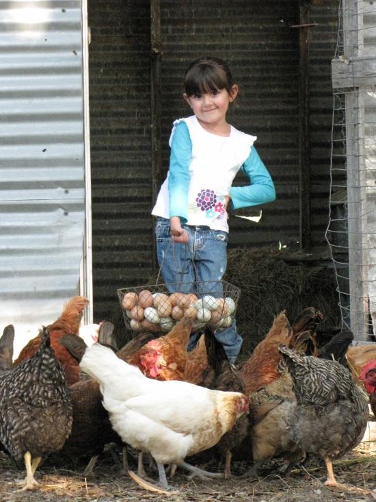 Gathering Eggs