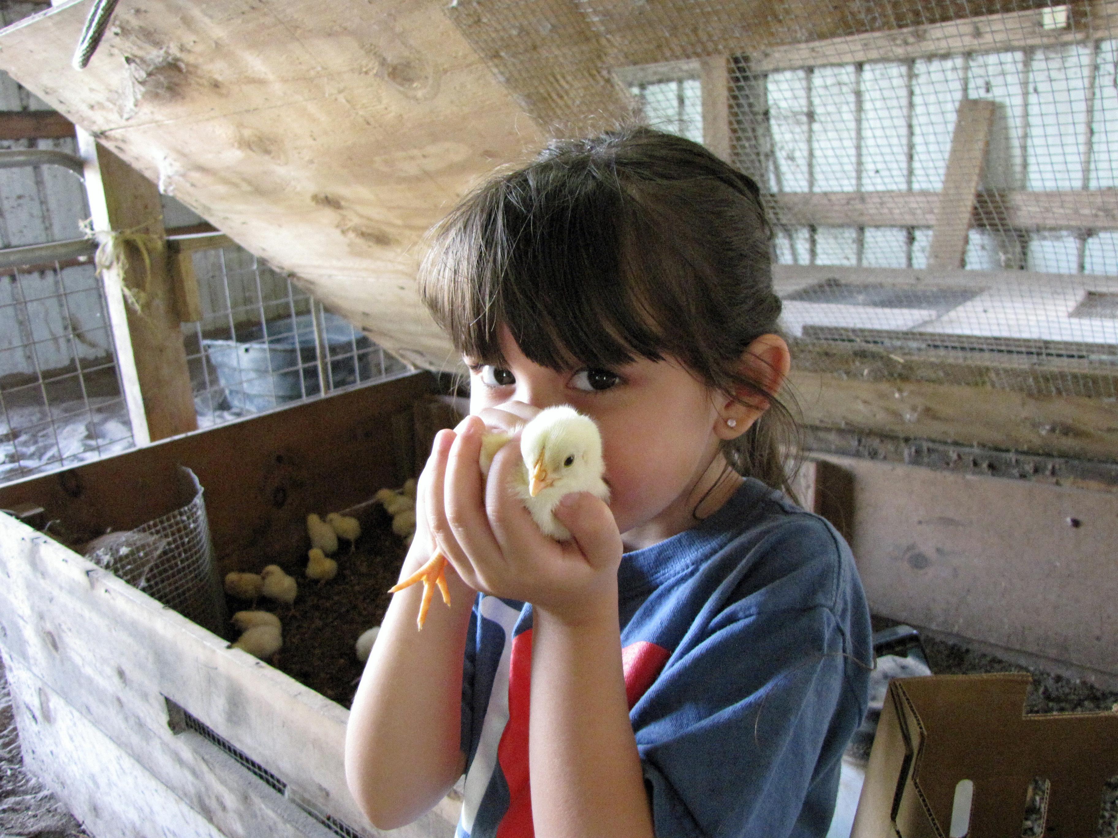the imprinting of birds four string farm