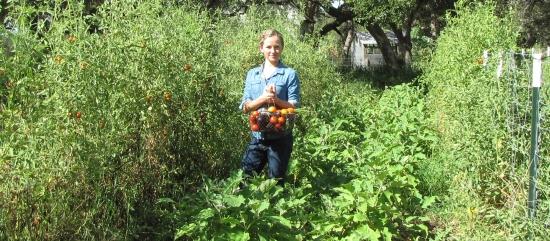 Kayla Harvesting Tomatoes