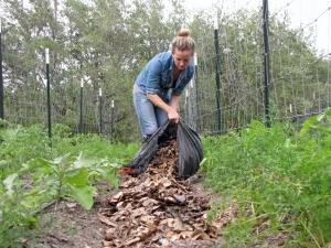 Adding Live Oak Leaf Mulch