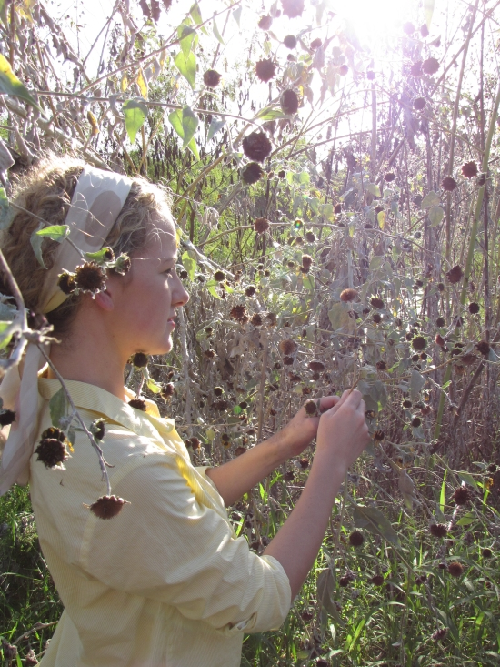 Kayla Taking Flowers at end of Season to Seed New Sunflower Hedgerow