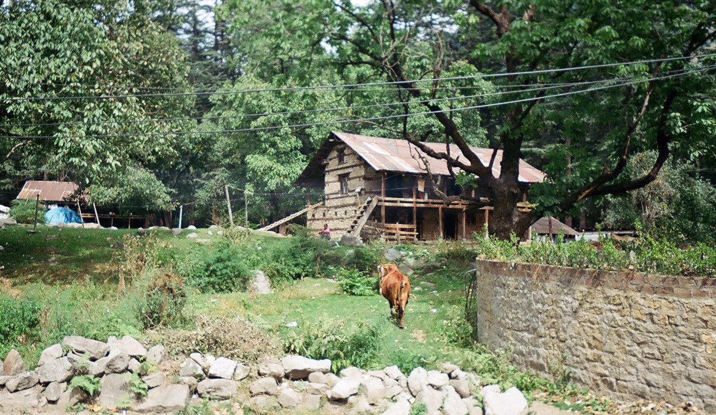 Himalayan Mountains Four String Farm