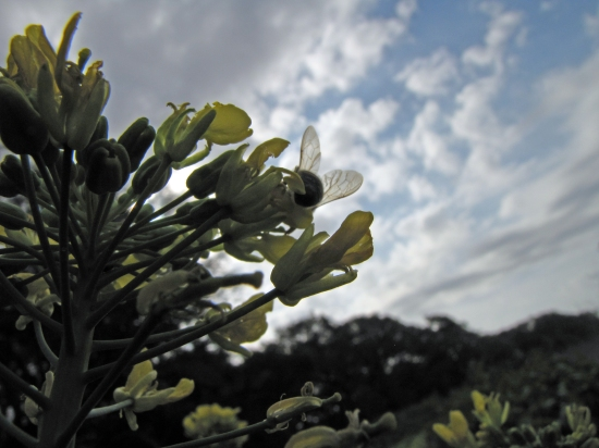 Bee with a Cloudy Sky