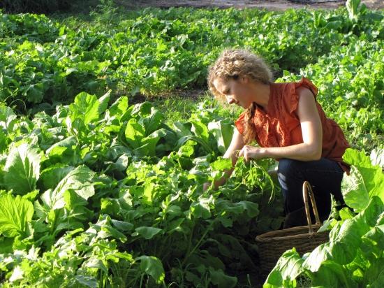 Intensive Successive Companion Planting