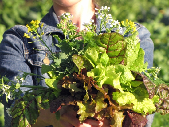 (Edible Bouquet:  Red and Green Lettuces, Beet Greens, Dill, and Radish and Broccoli Flowers)