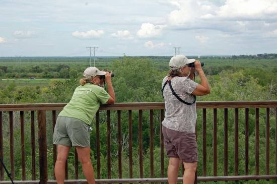 (Hawk Watchers:  Hazel Bazemore Park has excellent facilities for hawk watching)
