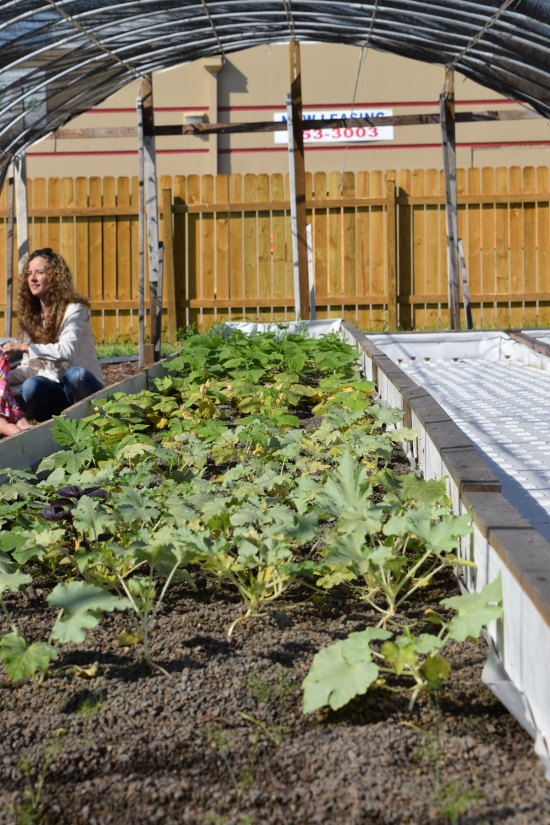 Water Circulates through Shale Grow Bed