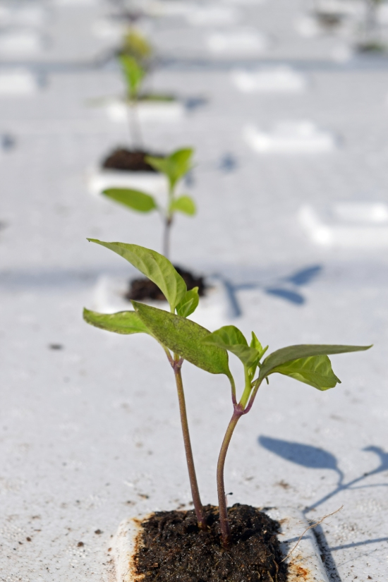 Young Plant Growing in Raft