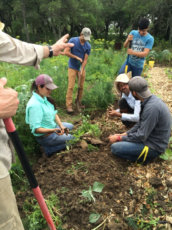 TAMUK pepper planting 4-17-16