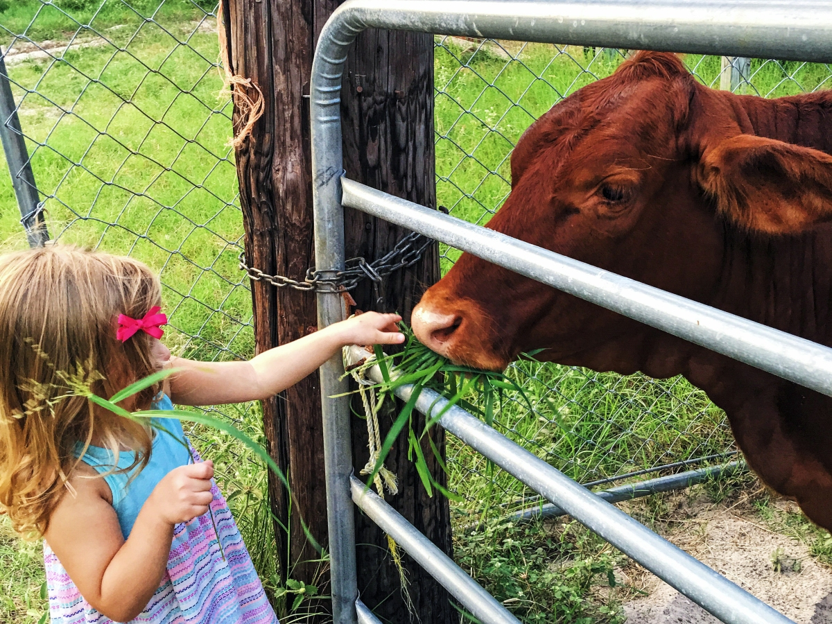 Emma Feeding Cow